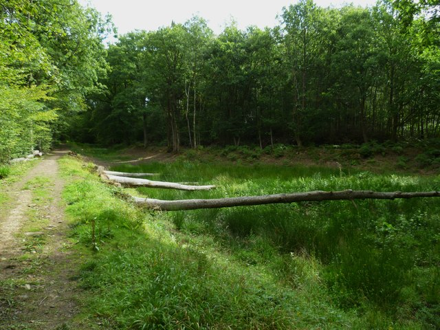 Wey and Arun Canal in Sidney Wood