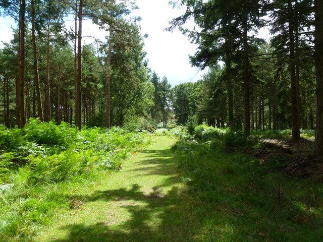 Alderhill Inclosure, forestry track