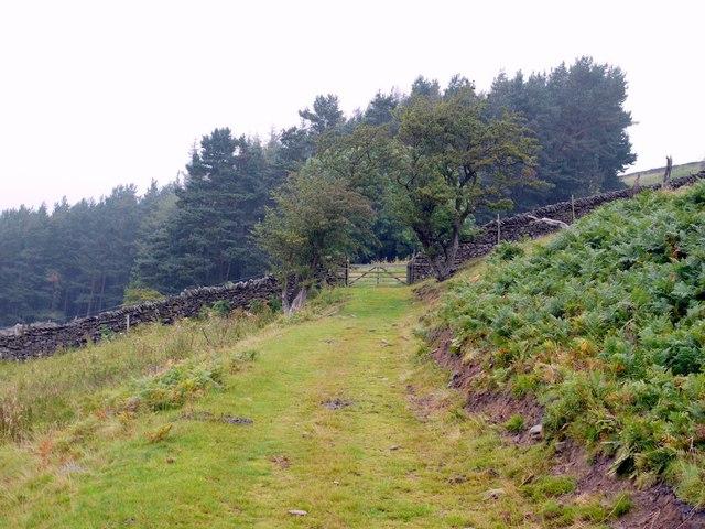 Approaching Fawn Wood