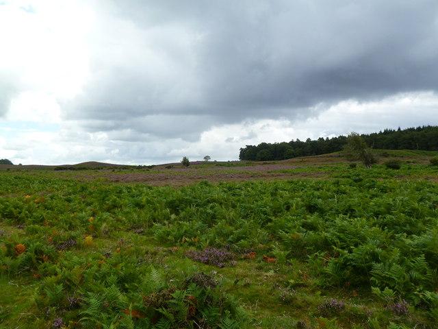 Ogdens, heathland
