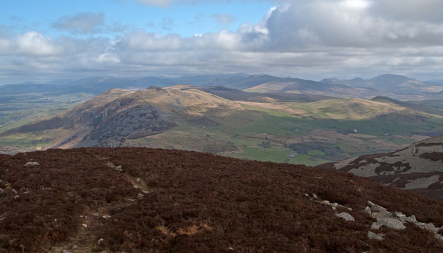 Heather cover of summit area of Yr Eifl
