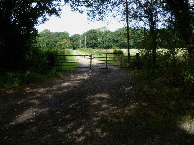 Farm track north off Lion's Lane