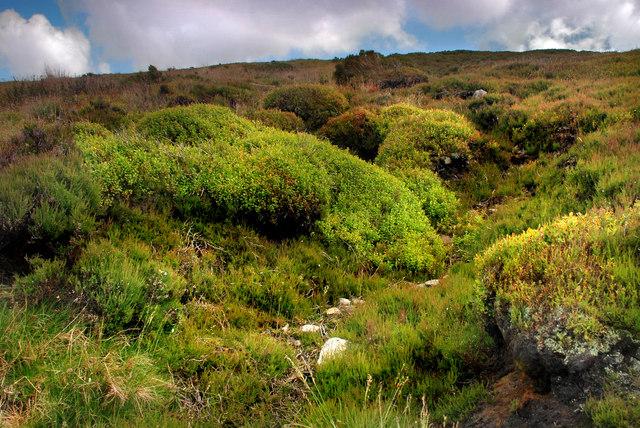 The slopes of  Hawthornwaite Fell