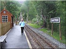 SH5946 : Nantmor Halt, Welsh Highland Railway by Martin Southwood