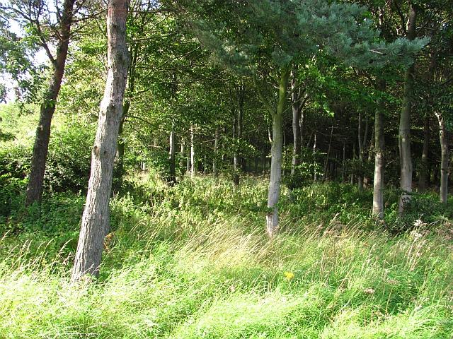 Woodland, Cocky Knowe