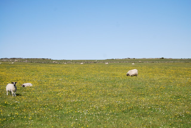 Sheep, The Heugh