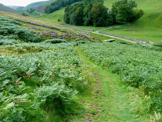 Green track to Logan Burn from Turnhouse Hill