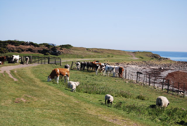 Animals grazing by St Oswald's Way