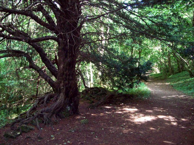 Yew-lined Path to Roche Abbey