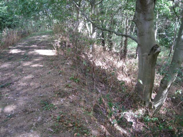 Footpath through Snail's Grove
