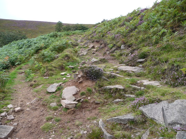 Heather on the path above the Vale of Ewyas