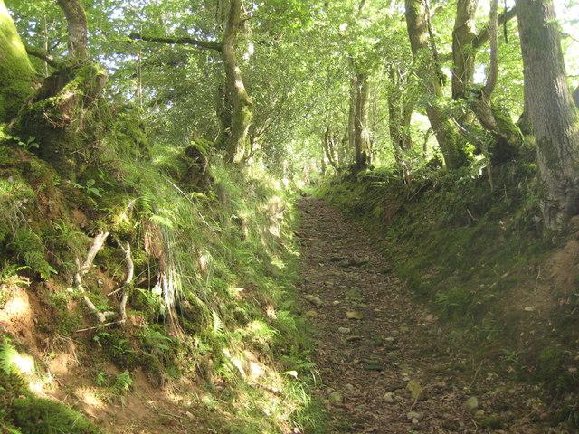 Hollow way near Pentre Ifan
