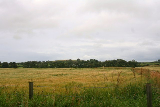 Grain by Auchloon