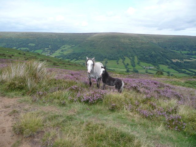 Mother and foal above the Vale of Ewyas in August