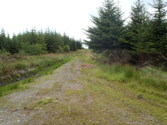 Forest track in Clatteringshaws Forest