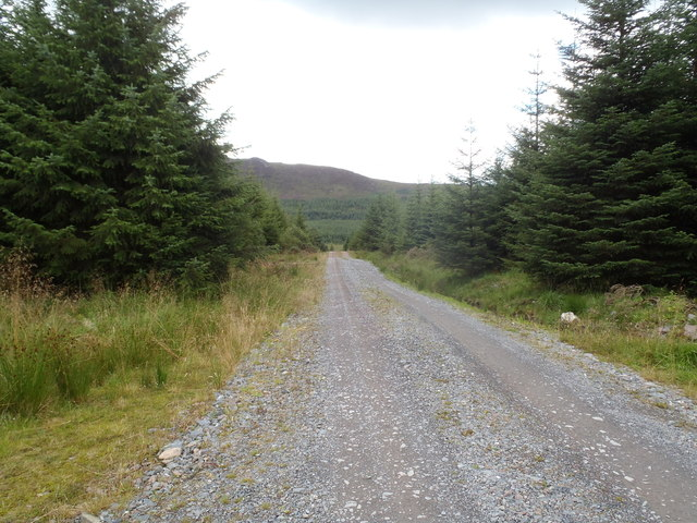 Forest road in Clatteringshaws Forest