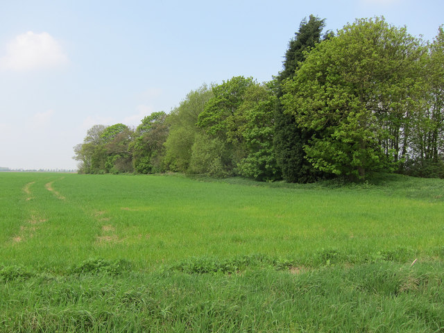 Small strip of woodland