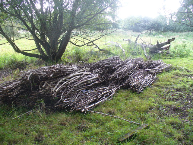 Wood Cuttings by Stoke Lock