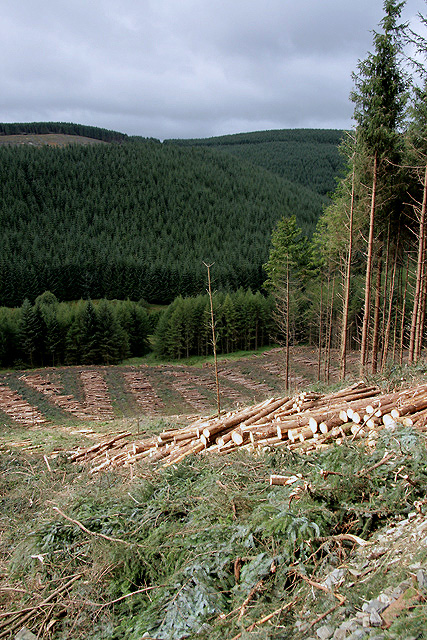 A forestry clear fell area