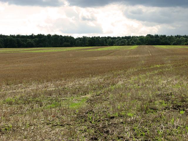 Belvue Plantation, Briningham