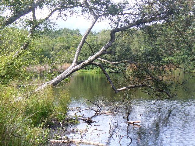 Rapley Lake, Southern Shore