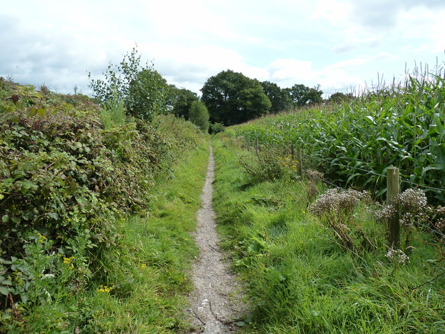 Bridleway bordered by Maize and banking of sandpit
