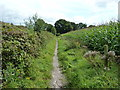 SU8521 : Bridleway bordered by Maize and banking of sandpit by Dave Spicer