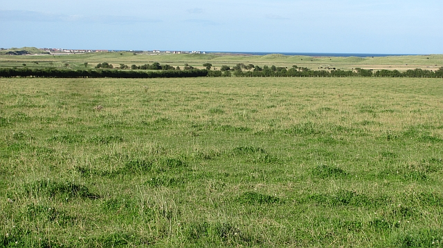 Grass, Newtonbarns