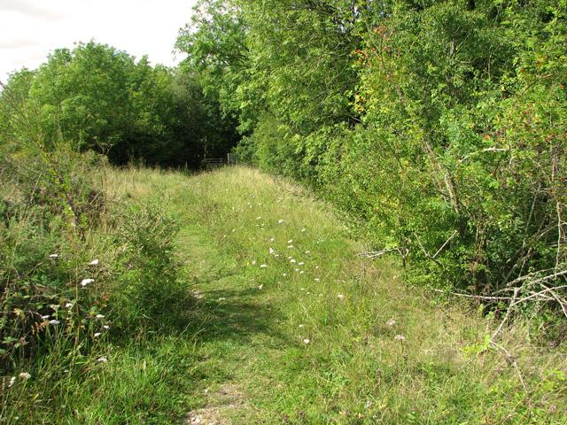 Path along disused railway embankment, Narborough