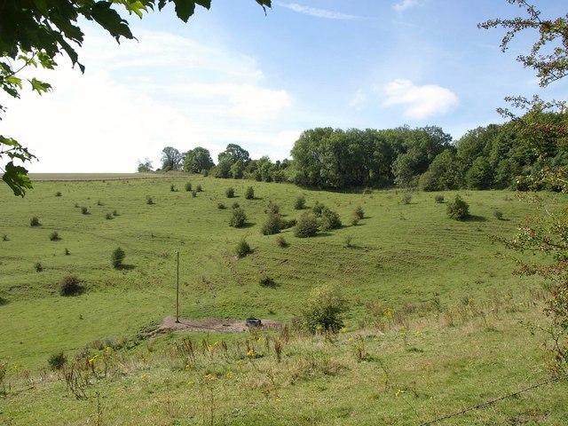 West side of Chirton Bottom