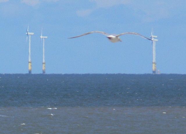 Seagull and wind turbines