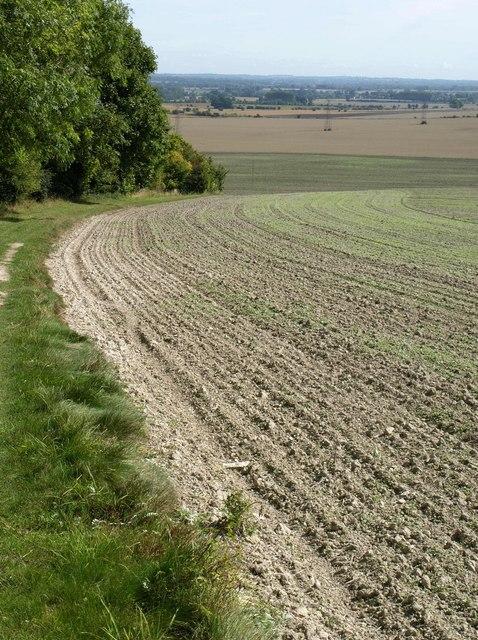 Field by Redhorn Plantation
