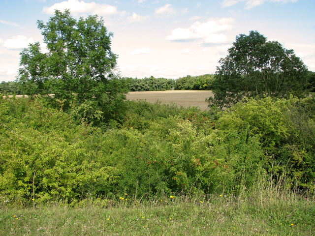 Cultivated fields beside railway embankment, Narborough