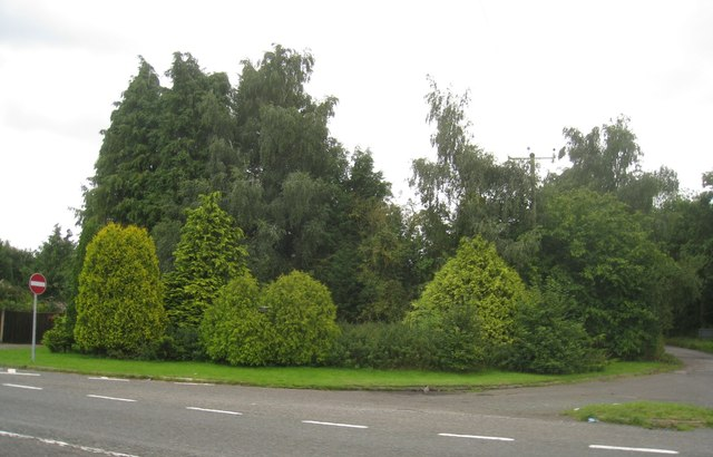 Fine collection of firs