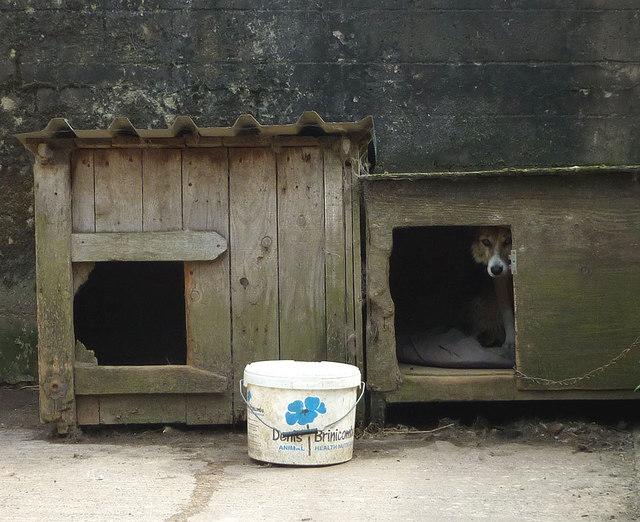 The guard dog of Reagill Grange
