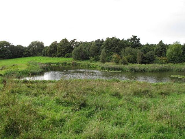 Pond near Scotland Street
