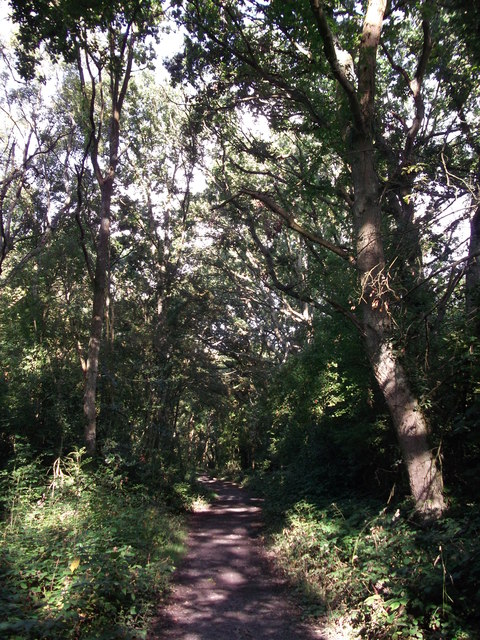 Footpath in Roundabout Wood (2)