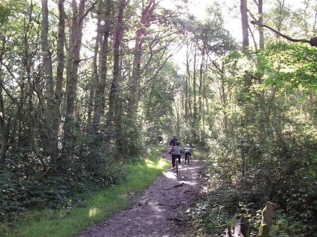 London Loop in Sparrow Wood