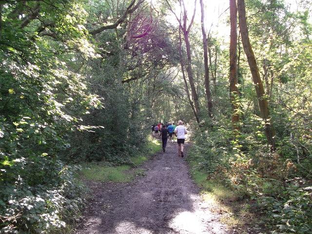 London Loop in Sparrow Wood (2)