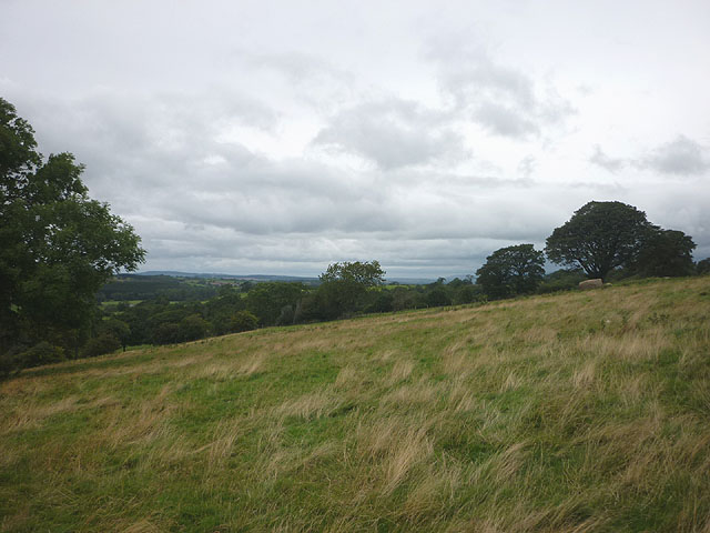 Pasture above Maulds Meaburn