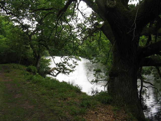 Pressmennan Lake through the trees