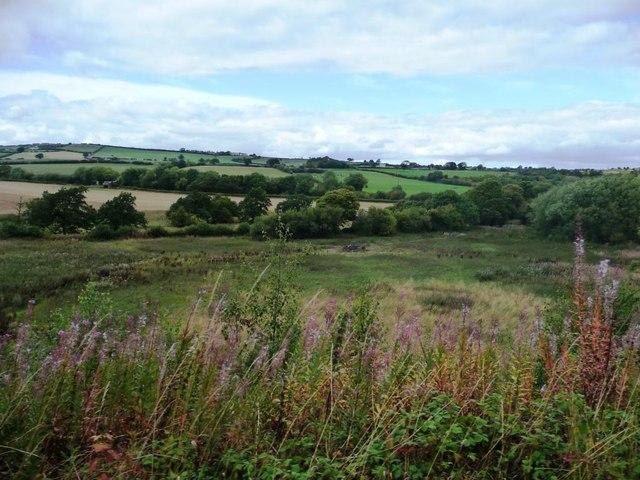 Rosebay willowherb alongside the railway tracks
