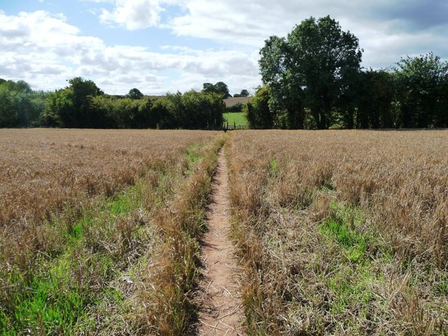 Footpath through the barley