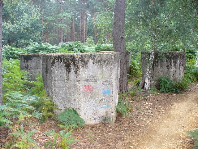 Woodland Strongpoint