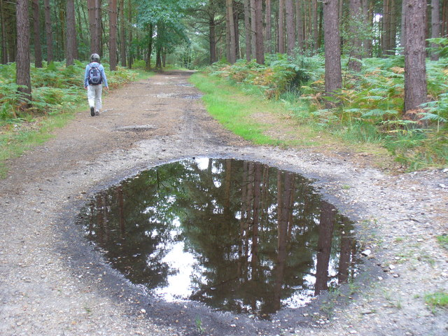 Woodland Path, Bagshot heath