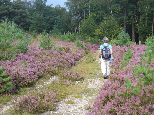 Rambling on Bagshot Heath