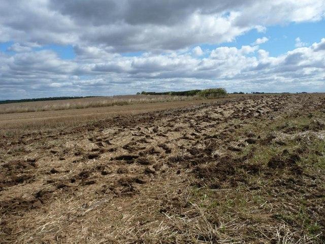 Tractor tracks across a stubble field