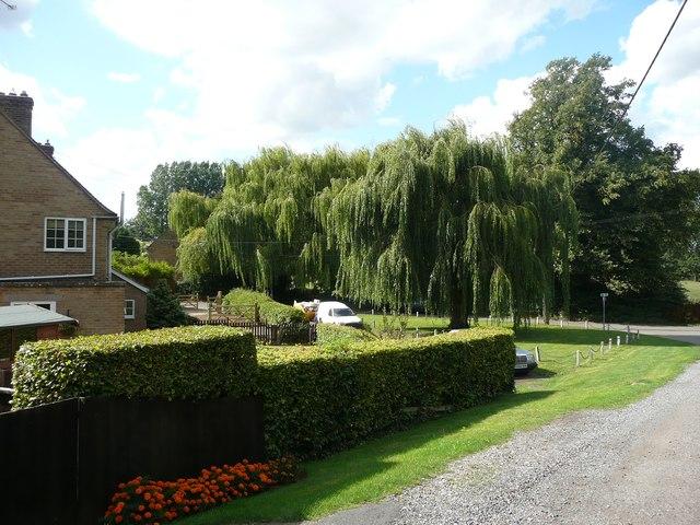 Willow trees, Boughton