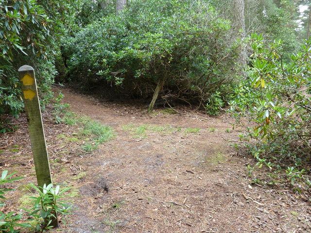 Path junction in The Warren