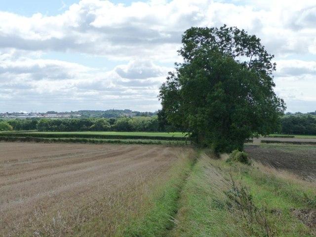 Large tree on the field edge